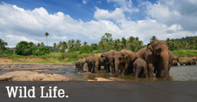 National Parks and Wild Life Sanctuary in Kerala