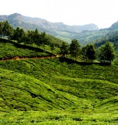 Kerala Fixed Departure Tour 6 Days Package