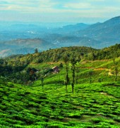 Kerala Hill Stations 5 Days Package