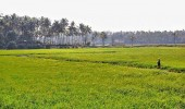 Agriculture Department of Kerala