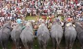 Aanayoottu Elephant Festival