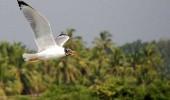 Kerala in March