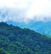 Mesmerizing Munnar 3 Days Tour Package