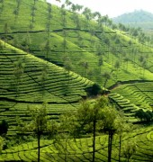 Exploring Kerala 6 Days Package