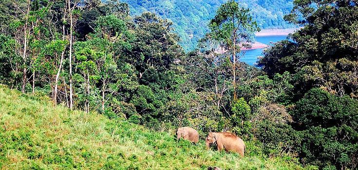 Gavi Kerala Travel Guide