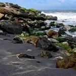 Mayyanad Beach
