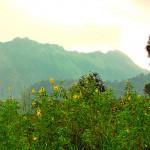 Ponmudi Scenic View