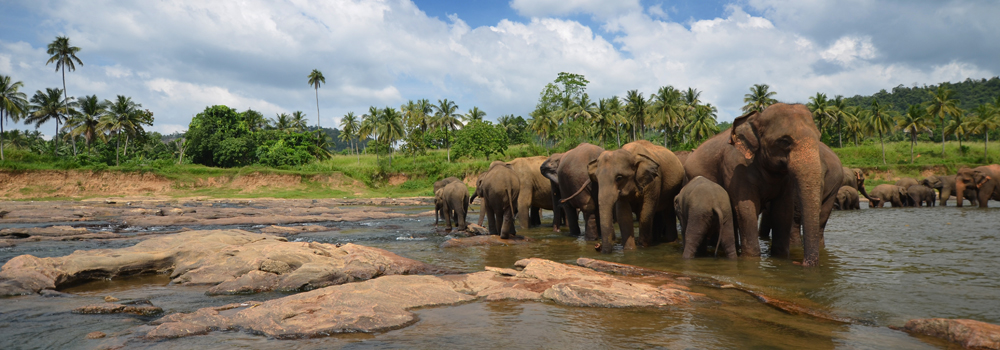 kerala-wildlife
