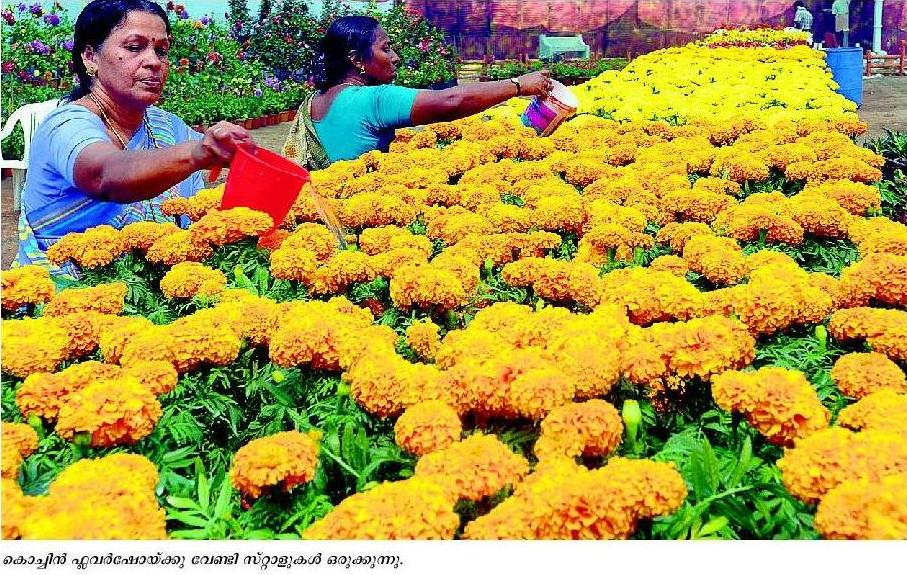 cochin flower show2013 - cochin flower showevent timings schedule