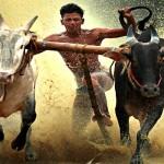 Cattle Bull Race in Adoor
