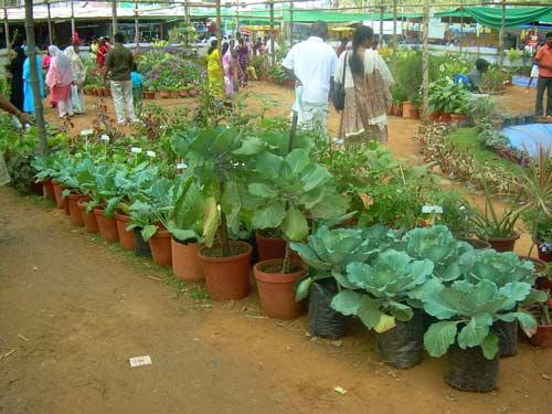 Fort Kochi Flower Show