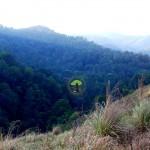 Gavi Greenery