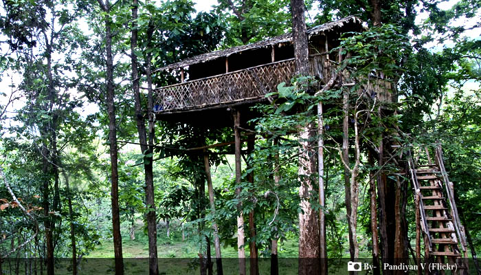 Kerala Tree Houses