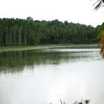 Manjeri Near Kottakkal